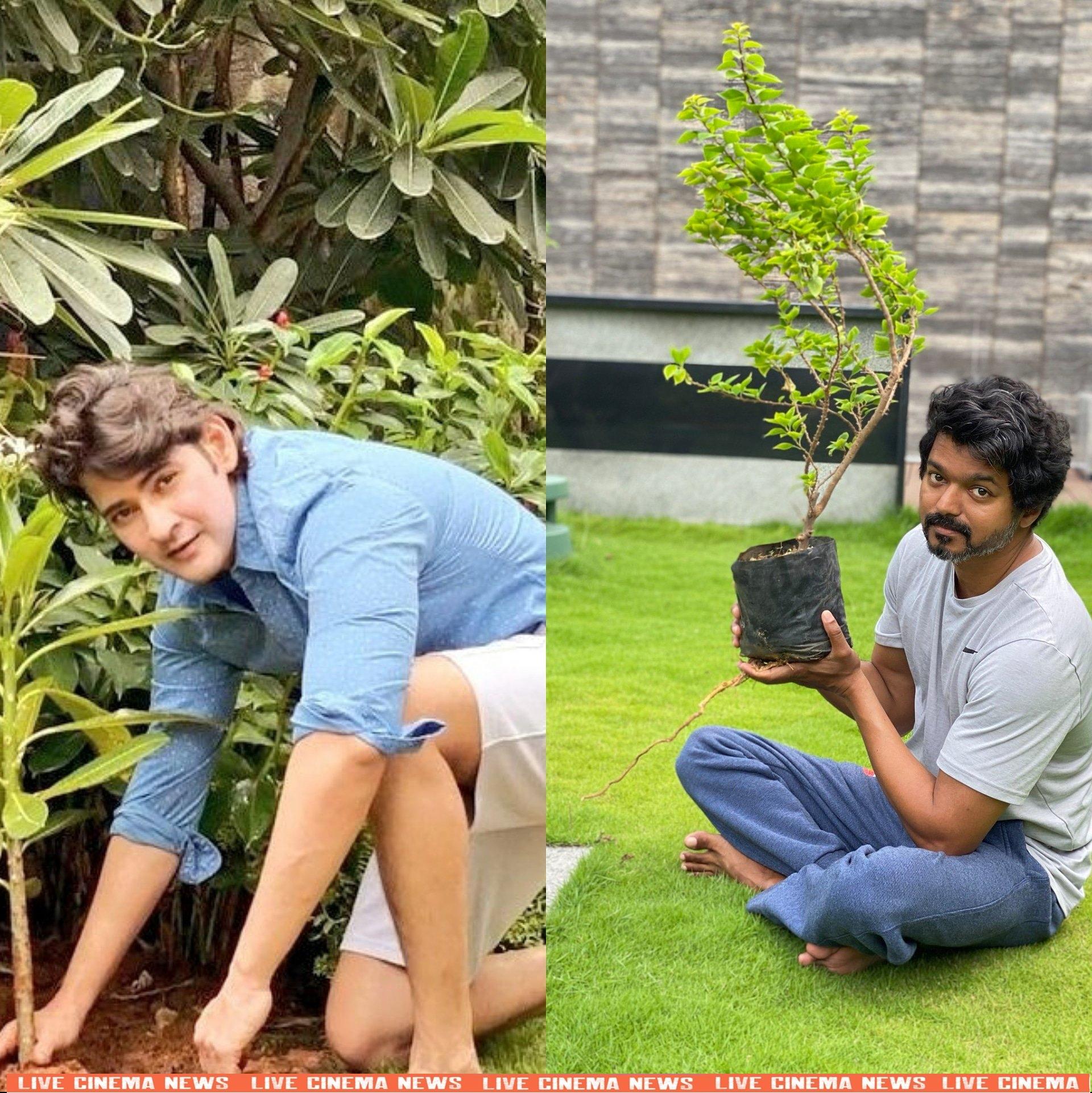 Thalapathy Vijay Accepts Mahesh Babu Challenge
